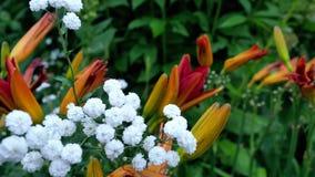 Un varierty de flores en el jardín Foto de archivo libre de regalías