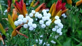 Un varierty de flores en el jardín Imagen de archivo libre de regalías