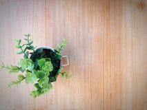 Un vaso dell'albero Fotografia Stock