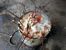 Un vaso in pieno dell'aragosta Fotografia Stock