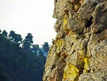 Un vautour sur une roche photos libres de droits
