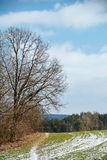 Un vecchio albero al bordo del campo Immagini Stock Libere da Diritti