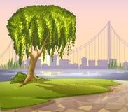 Un vecchio albero gigante attraverso le alte costruzioni Immagini Stock Libere da Diritti
