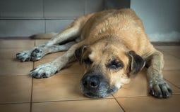 Un vecchio cane che si trova davanti alla casa Fotografia Stock