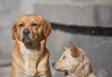 Un vecchio cane con gli occhi costanti Immagine Stock