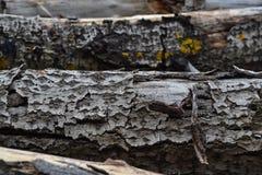 Un vecchio ceppo di legno per un fuoco o una stufa Fotografia Stock