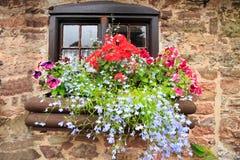 Un vecchio cottage del mattone con le finestre di legno e una scatola di finestra colourful in pieno di fiori colourful Immagine Stock
