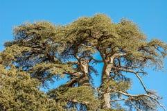 Un vecchio e grande albero che cede questa energia pacifica Immagini Stock