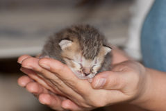 Un vecchio gattino di settimana fotografie stock libere da diritti
