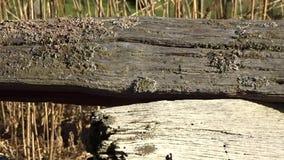 Un vecchio recinto della spaccatura-ferrovia con i licheni nel parco di stato di Grandview, WV meraviglioso selvaggio video d archivio