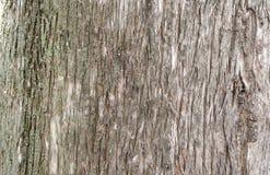 Un vecchio tronco di albero come sfondo naturale Fotografia Stock Libera da Diritti