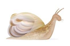 Un vecteur d'escargot illustration stock