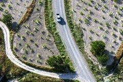 Un vehículo conduce abajo de un camino entre los campos de las vides de uva cultivadas que crecen cerca de Goreme en Turquía Fotos de archivo libres de regalías