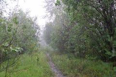 Un verano del bosque del puente bajo la lluvia exótico imagenes de archivo
