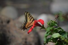 Un verano llenó de las mariposas en el jardín de flores Fotos de archivo libres de regalías