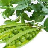 Un verde di pisello è in un baccello Fotografie Stock