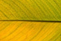Un verde e una foglia di morte gialla della pianta fotografie stock libere da diritti
