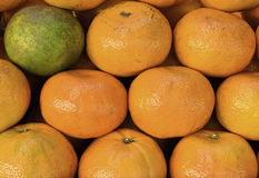 Un verde fra gli aranci Immagine Stock Libera da Diritti