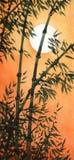 Un verger en bambou au coucher du soleil Photographie stock libre de droits
