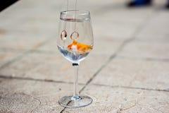 Un verre avec un poisson rouge et des anneaux de mariage Photo libre de droits