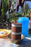 Un verre d'hachisch dans l'Inde Photos stock