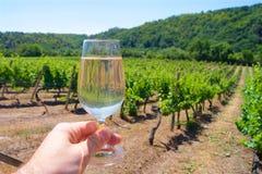 Un verre de vin rouge sur un vignoble photos stock