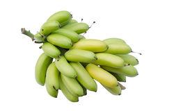 Un vert tropical de groupe de banane image stock