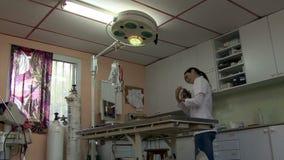 Un veterinario abbastanza giovane controlla un gattino video d archivio