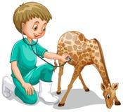 Un veterinario de sexo masculino Check Up Giraffe ilustración del vector
