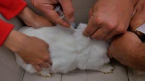 Un veterinario inyecta un conejo blanco con una vacuna contra una enfermedad almacen de metraje de vídeo