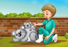 Un veterinario que toma el cuidado de Coala libre illustration