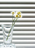 Un vetro con uno sprig dei fiori selvaggi Fotografia Stock Libera da Diritti