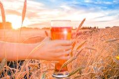 Un vetro di birra in una mano in un giacimento di grano Fotografia Stock Libera da Diritti