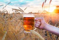 Un vetro di birra in una mano in un giacimento di grano Fotografia Stock