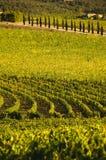 Un viñedo en Chianti Toscana, Italia Imagen de archivo libre de regalías