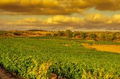 Un viñedo en un país mediterráneo en la puesta del sol Fotos de archivo