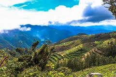 Un viaggio ai terrazzi del riso Fotografie Stock