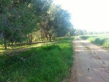 Un viaggio di fine settimana alla foresta anteriore Immagine Stock