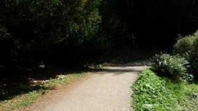 Un viaje a lo largo de rastros del bosque metrajes