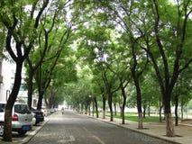 Un viale allineato con gli alberi di pagoda Immagini Stock Libere da Diritti