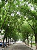 Un viale allineato con gli alberi di pagoda Immagine Stock