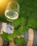 Un vidrio de hojas del vino blanco y del verde Fotografía de archivo