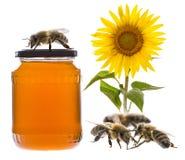 Un vidrio del tarro con la miel Fotografía de archivo libre de regalías