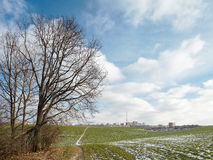 Un vieil arbre au bord du champ près de la ville Images stock