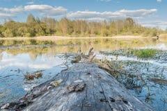Un vieil arbre sans écorce ment du rivage au lac, dans l'eau reflète un ciel bleu avec des nuages et une ligne d'horizon avec un  Photographie stock libre de droits