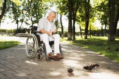 Un vieil homme seul s'assied en parc sur un fauteuil roulant et alimente des pigeons Image stock