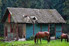 Un viejo refugio de la montaña en un área de montaña abandonada con dos caballos delante de ella en un prado verde con un fondo d Imagen de archivo