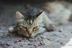 Un vieux chat Photographie stock