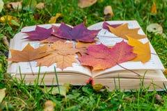 Un vieux livre ouvert épais avec une couverture blanche de tissu et un groupe de l'érable sec d'herbier de feuilles d'automne rou photos stock