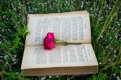 Un vieux livre sur l'herbe, une rose comme signe du livre image libre de droits